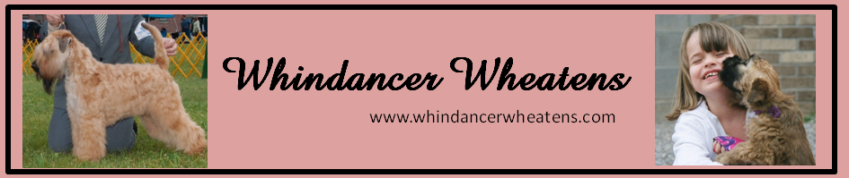 Whindancer Wheatens